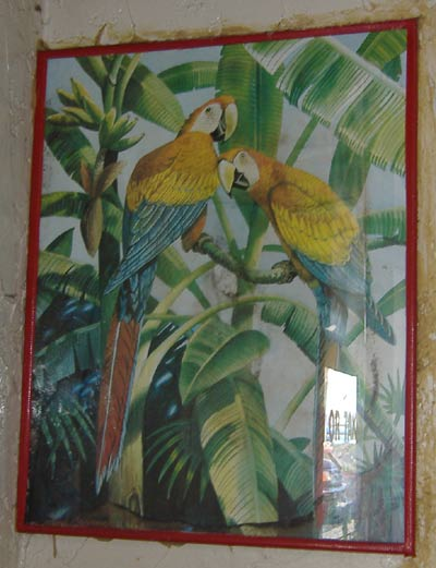 Cancun - Parrot Painting